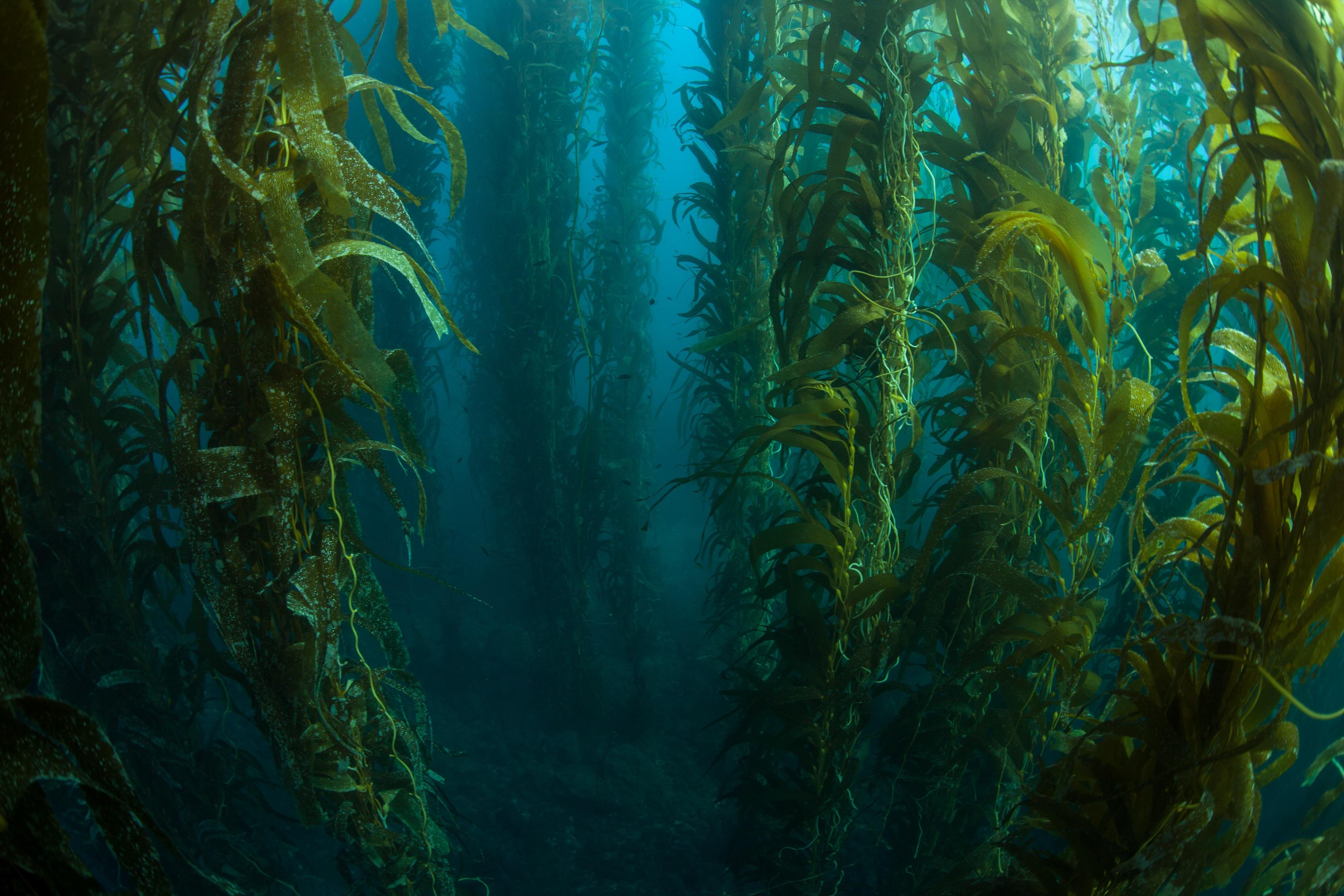 underwater painting seaweed - HD3400×2266