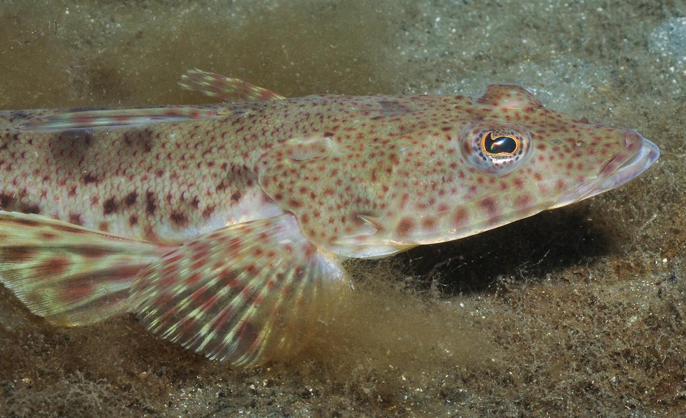 Photo: Rick Stuart-Smith Reef Life Survey