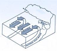 upwelling process in coastal waters
