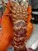 Lobster Tag