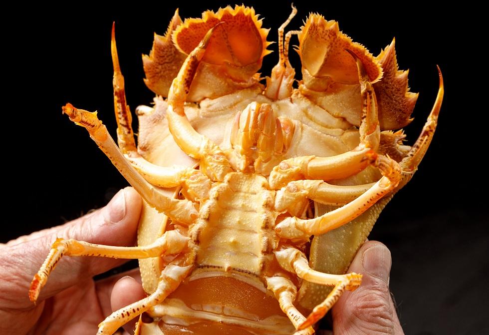 Bay Lobster