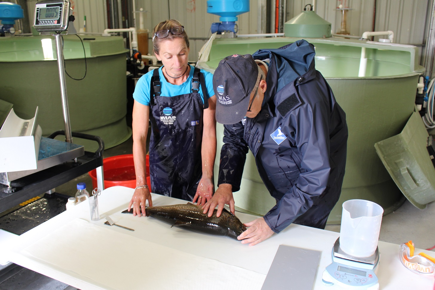 Salmon examined in EAF